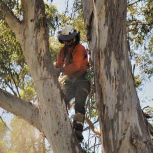 Arbor Corps Treee Services Northern Rivers