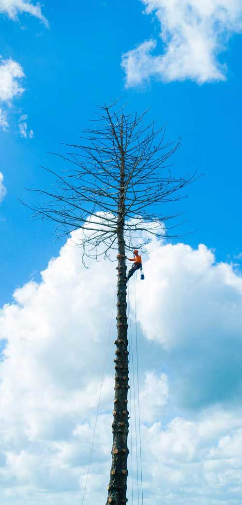 Tree services byron bay